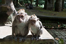 Indonesien 2009